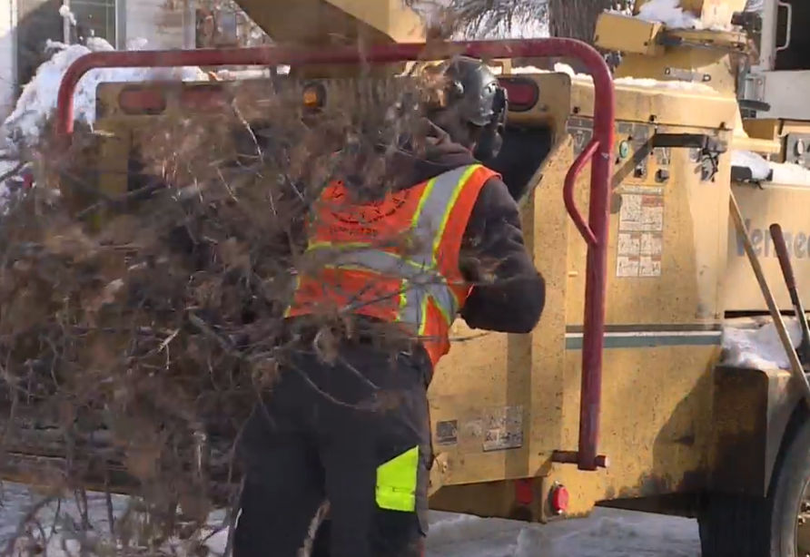 Severe storms can bring down even the healthiest trees, but Salt Lake City's trees don't get pruned as often as arborists would prefer. (Photo: KUTV)