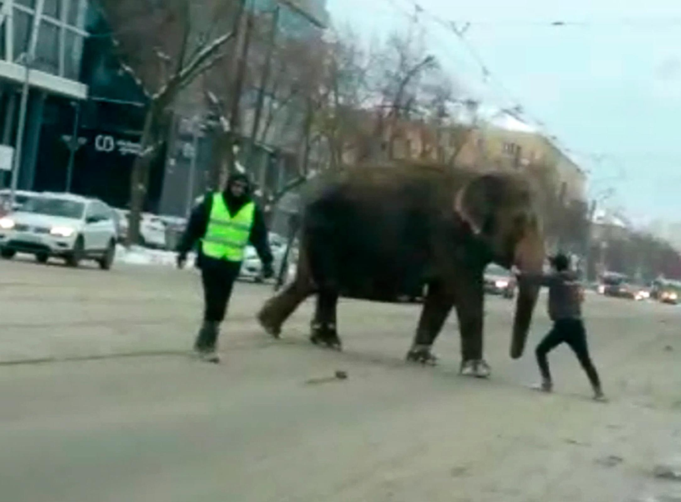 In this handout photo taken from a footage and released by Daniil Romanov, An elephant crosses the street in Yekaterinburg, Russia, Friday, Jan. 24, 2020. Two elephants escaped from a local circus while its troupe tried to load then into a truck to head to the next destination. (Daniil Romanov via AP)