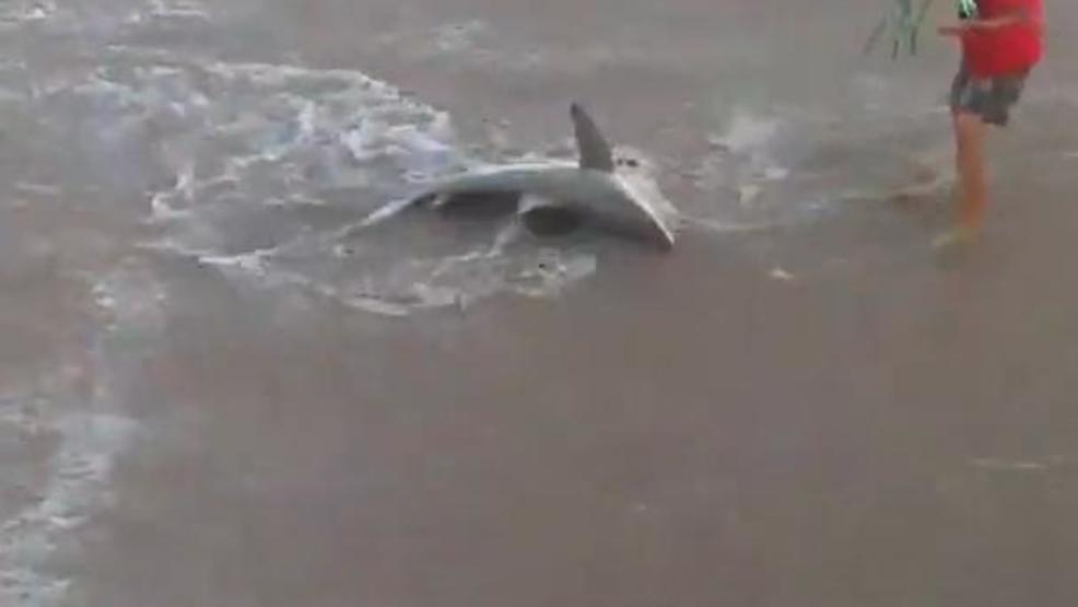 North Carolina Fishermen Hook Sharks On Outer Banks Pier Wham