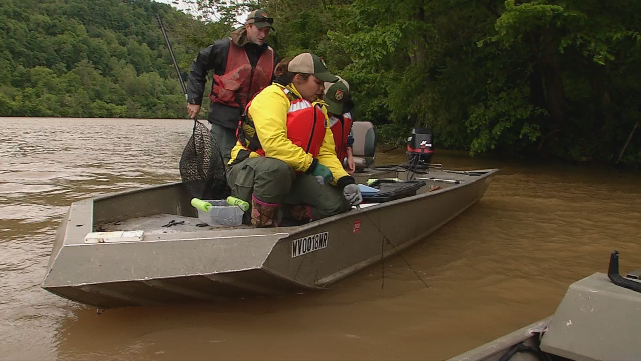 WVDNR biologists locate the catfish trot lines they set. (WCHS/WVAH)<p></p>