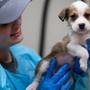 Adoptable pets from tornado-torn Alabama communities arrive in Oregon