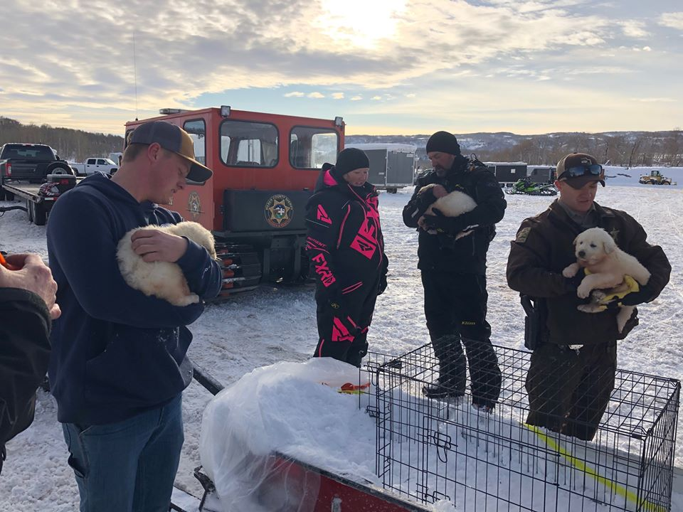 The mother of 7-week-old puppies, that were rescued by Utah crews in the Monte Cristo area on Sunday, has not been found. (Photo courtesy of Weber County Sheriff's Office)