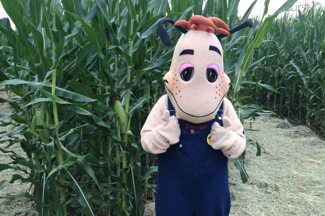 Corny Maze at Traders Village in Southwest San Antonio (SBG photo)