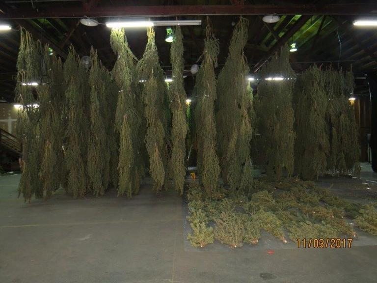Hundreds of marijuana plants found inside SE Portland warehouse (Portland Police photo)<p></p>