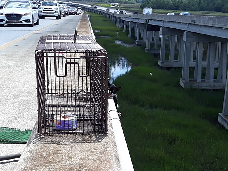 Cat in danger rescued from I-526 bridge. (Charleston County Sheriff's Office)