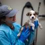 Oregon Humane Society and other groups across US take in dogs, cats after Alabama tornado
