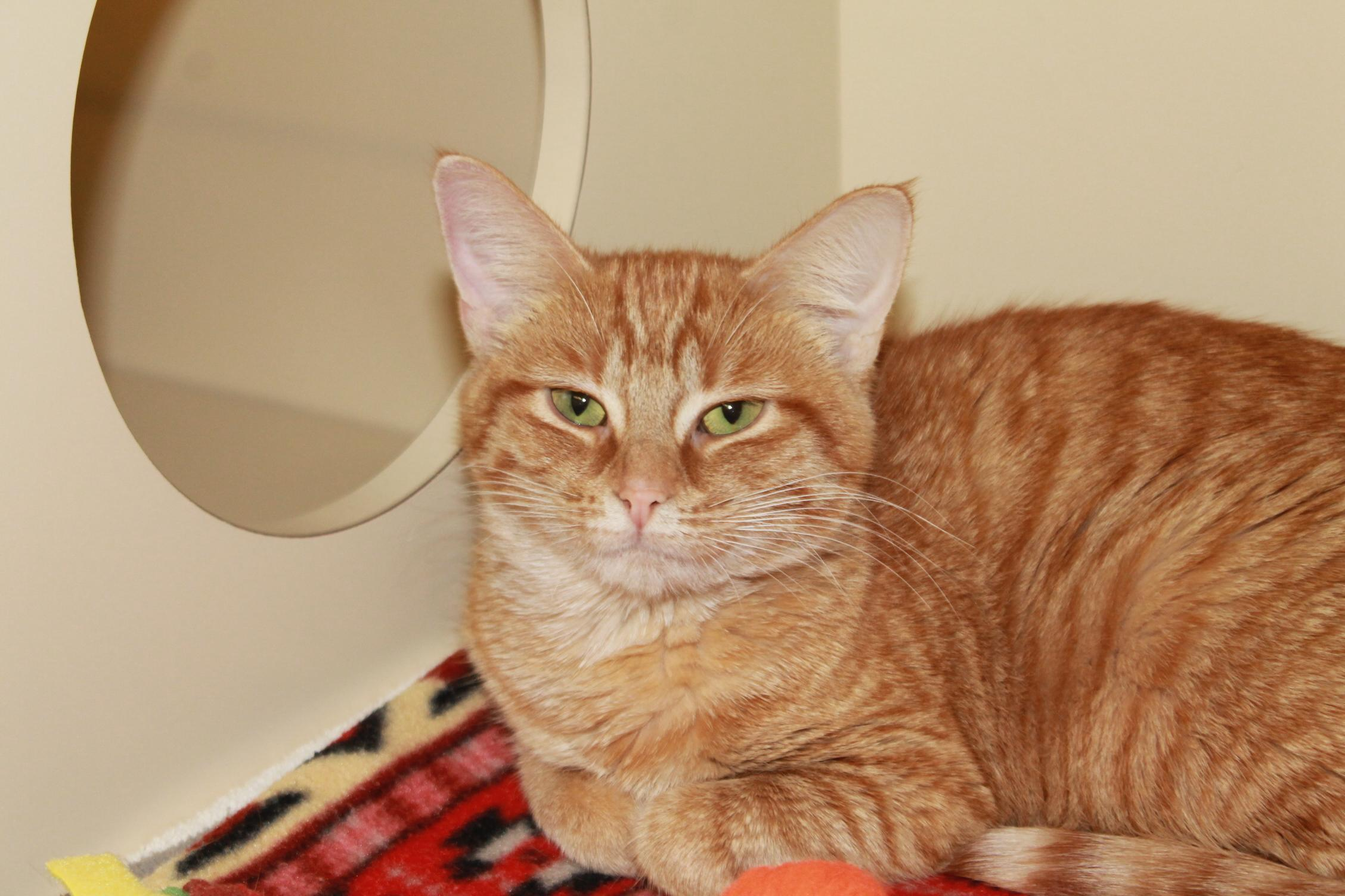 Meet Winifred at the Charlevoix Area Humane Society in Boyne City.