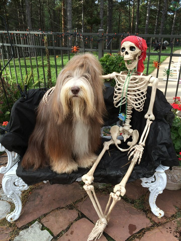 Fudge likes to hang with his skeleton friend on Halloween. (Photo Courtesy: Carolyn Hoffman)